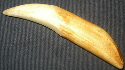 Carved bone looking like a tiger tooth