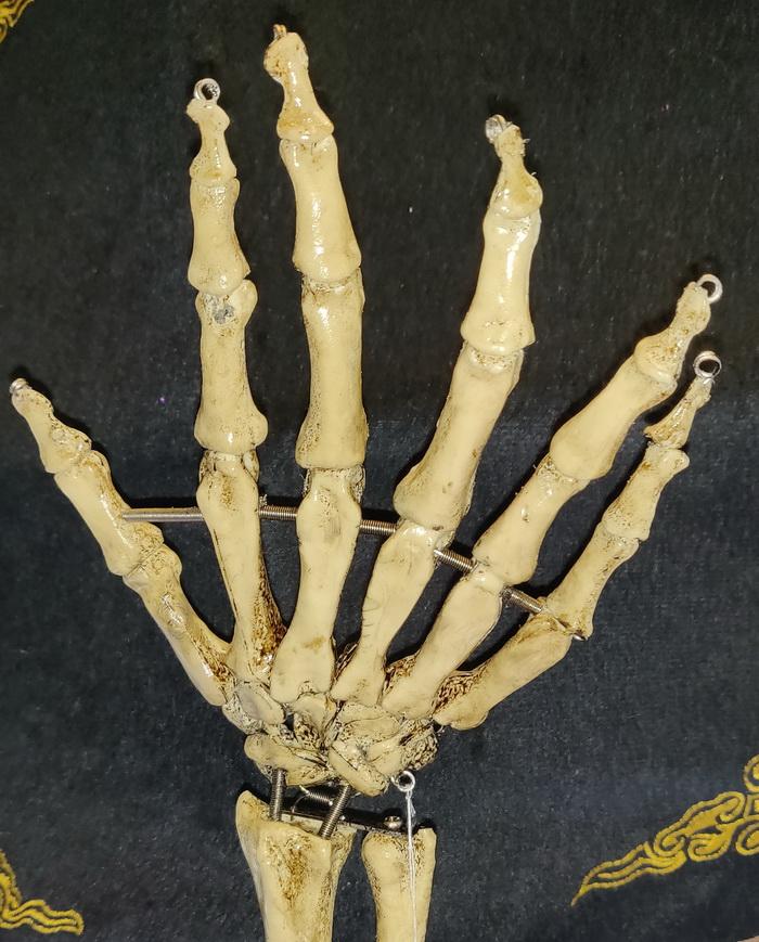 Six fingers skeleton