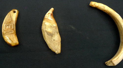 Magic carved bear tooth